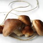 shiitake-mushrooms